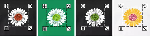 Fleurs printanières à personnaliser, marguerites ou pâquerettes
